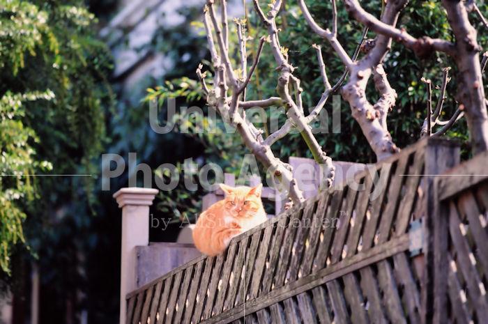 アメリカ サンフランシスコ 塀の上のねこ / sfcat01-187