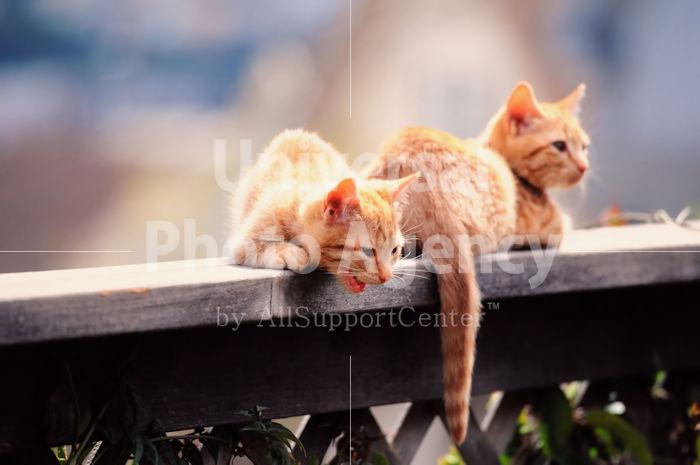 アメリカ サンフランシスコ 塀の上で獲物をみつけた猫たち / sfcat01-189