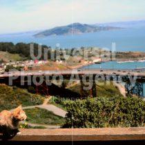 アメリカ サンフランシスコ 海をみつめるねこ / sfcat01-194
