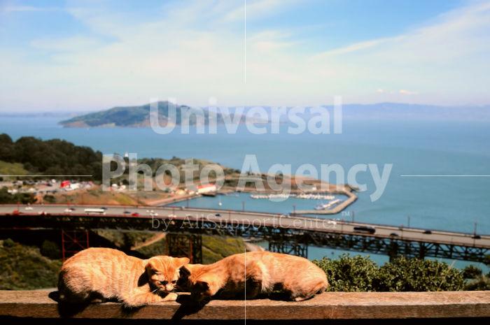 アメリカ サンフランシスコ 海をバックに遊んでいる二匹のねこ / sfcat01-195