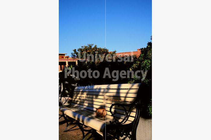 アメリカ サンフランシスコ ベンチでくつろぎ中 / sfcat01-197