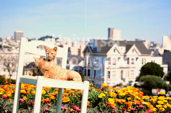 アメリカ サンフランシスコ 街並みを背にした花と二匹のネコたち / sfcat01-198