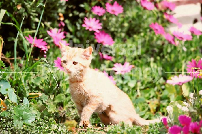 アメリカ サンフランシスコ 花とねこ / sfcat01-19