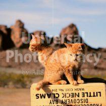 アメリカ 箱の上の猫たち / sfcat01-200