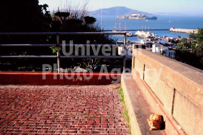 アメリカ サンフランシスコ 海をバックに昼下がりのくつろぎネコ / sfcat01-201