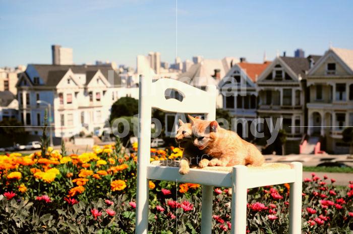 アメリカ サンフランシスコ 街並みを背にした花と二匹のネコたち / sfcat01-202