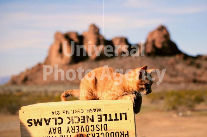 アメリカ 箱の上の猫 / sfcat01-203