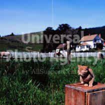 アメリカ サンフランシスコ 草原のねこ / sfcat01-205