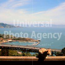 アメリカ サンフランシスコ 海をバックに思案中 / sfcat01-207