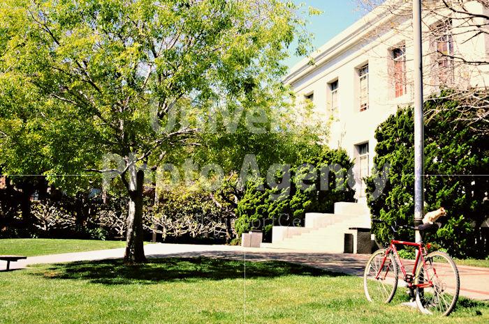 アメリカ サンフランシスコ 自転車の上のねこ / sfcat01-208
