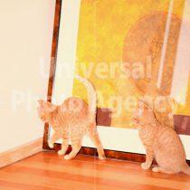 アメリカ サンフランシスコ 絵の後ろを探ろうとしているねこ / sfcat01-209