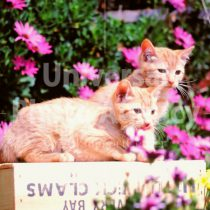 アメリカ サンフランシスコ 花とねこ / sfcat01-20