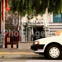 アメリカ サンフランシスコ 車の上から見つめるネコ / sfcat01-210
