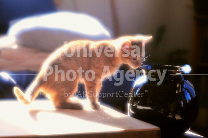 アメリカ サンフランシスコ 花瓶とねこ / sfcat01-22