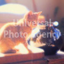 アメリカ サンフランシスコ 花瓶とねこ / sfcat01-23