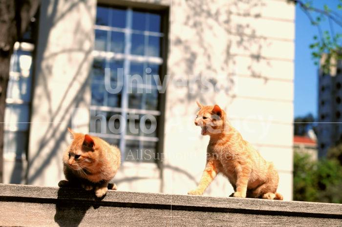 アメリカ サンフランシスコ 屋根の上のねこ / sfcat01-24