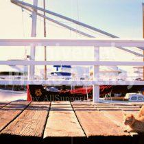 アメリカ サンフランシスコ ハーバーくつろぎ中猫 / sfcat01-28
