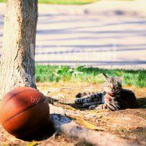 アメリカ サンフランシスコ 公園にてくつろぎ猫 / sfcat01-29