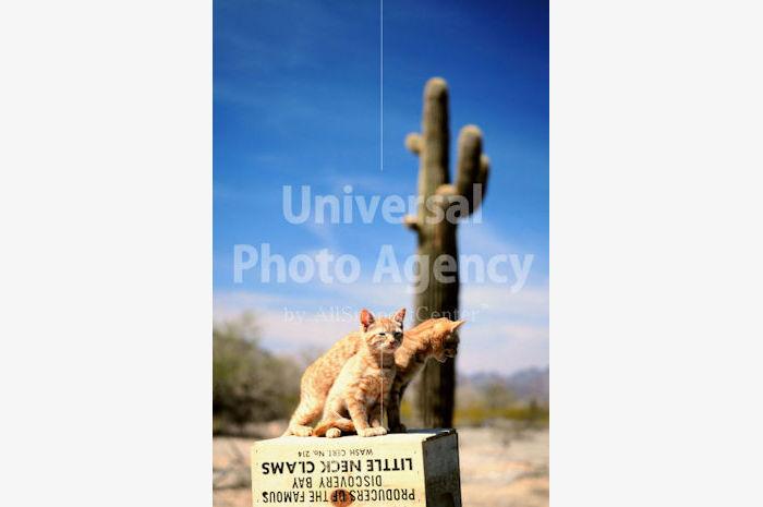 アメリカ 砂漠のねこ / sfcat01-2