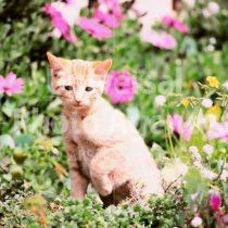 アメリカ サンフランシスコ 花とねこ / sfcat01-30