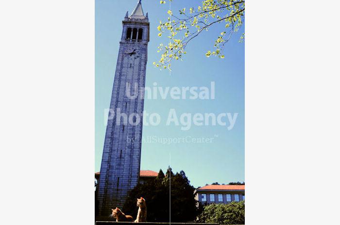 アメリカ サンフランシスコ 青空とねこ / sfcat01-39