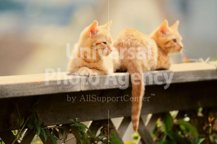 アメリカ サンフランシスコ ネコ / sfcat01-3