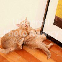 アメリカ サンフランシスコ くつろぎ猫 / sfcat01-40