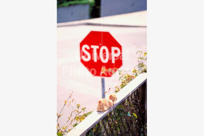 アメリカ サンフランシスコ 標識ねこ / sfcat01-41