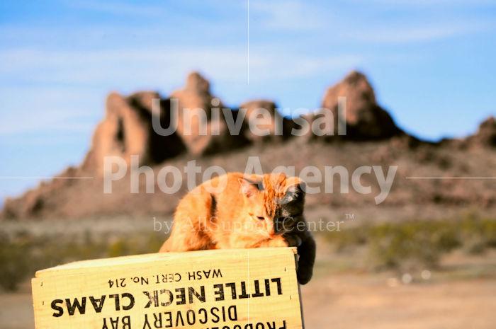 アメリカ 砂漠のねこ / sfcat01-46