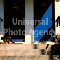 アメリカサンフランシスコ 家の前の猫 / sfcat01-49