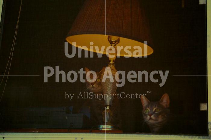 アメリカ サンフランシスコ 窓辺のねこ / sfcat01-4