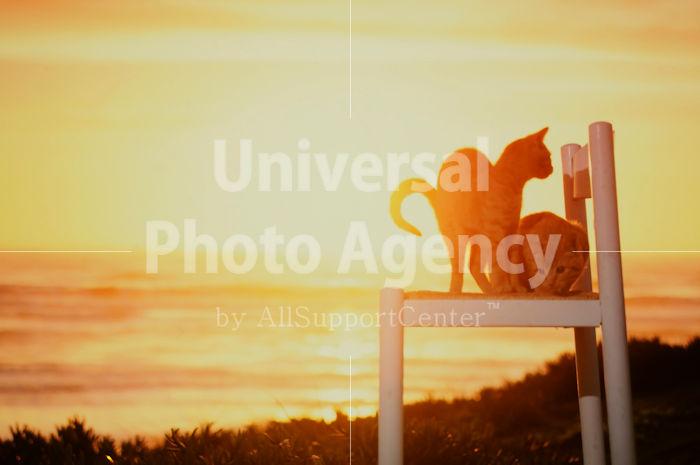 アメリカ サンフランシスコ いすから夕陽をみているねこ / sfcat01-51