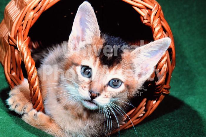 アメリカ サンフランシスコ かごネコ / sfcat01-53