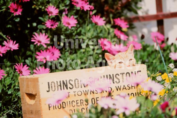 アメリカ サンフランシスコ 花とねこ / sfcat01-57