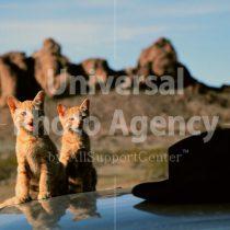 アメリカ サンフランシスコ 猫と帽子と・・ / sfcat01-60