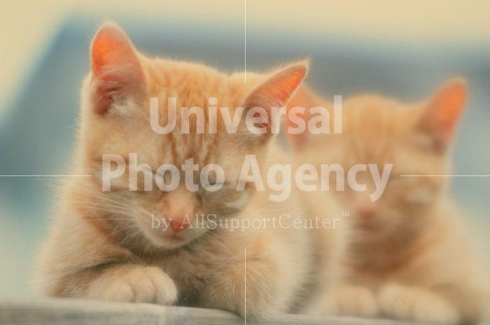 アメリカ サンフランシスコ 塀の上の二匹の眠り猫 / sfcat01-64