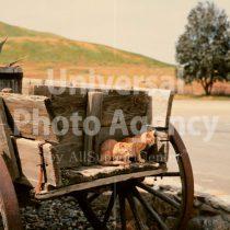 アメリカ サンフランシスコ リアカーの上の二匹のねこ / sfcat01-65