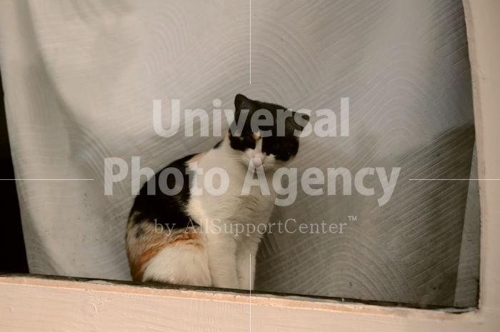 アメリカ サンフランシスコ 窓辺のねこ / sfcat01-6