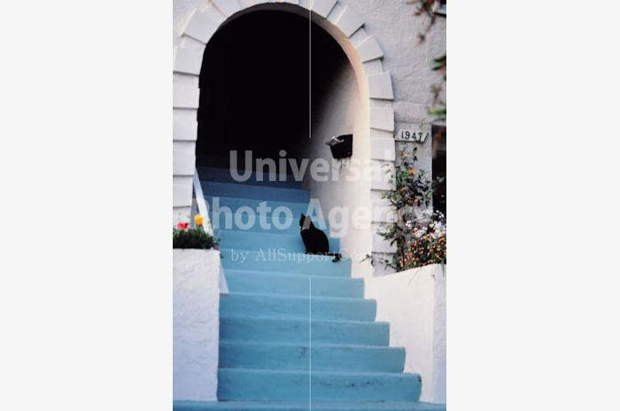 アメリカ サンフランシスコ 階段ねこ / sfcat01-72