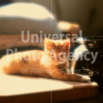 アメリカ サンフランシスコ 陽だまりと花瓶とねこ / sfcat01-73