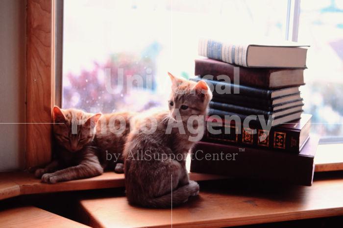 アメリカ サンフランシスコ 窓辺の二匹のねこ / sfcat01-76