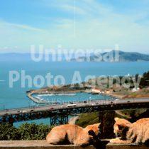 アメリカ サンフランシスコ 海をのぞむネコ / sfcat01-78