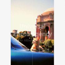 アメリカ サンフランシスコ 車の上のねこ / sfcat01-7