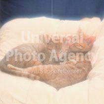 アメリカ サンフランシスコ お昼寝する二匹のネコ / sfcat01-80