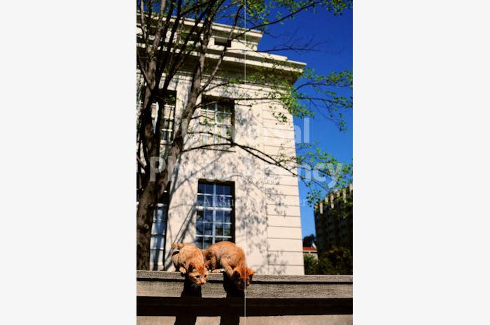 アメリカ サンフランシスコ 白い家と塀と二匹のねこ / sfcat01-81