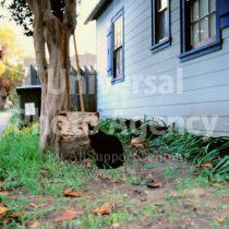 アメリカ サンフランシスコ 黒猫 / sfcat01-82