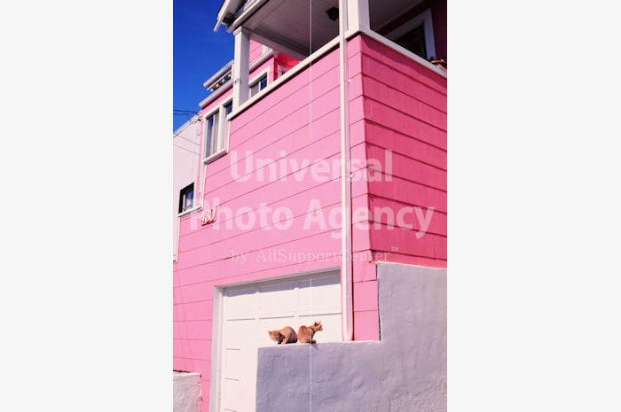 アメリカ サンフランシスコ ピンクハウスと二匹のネコ / sfcat01-86