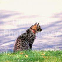 アメリカ サンフランシスコ 川辺の猫 / sfcat01-8