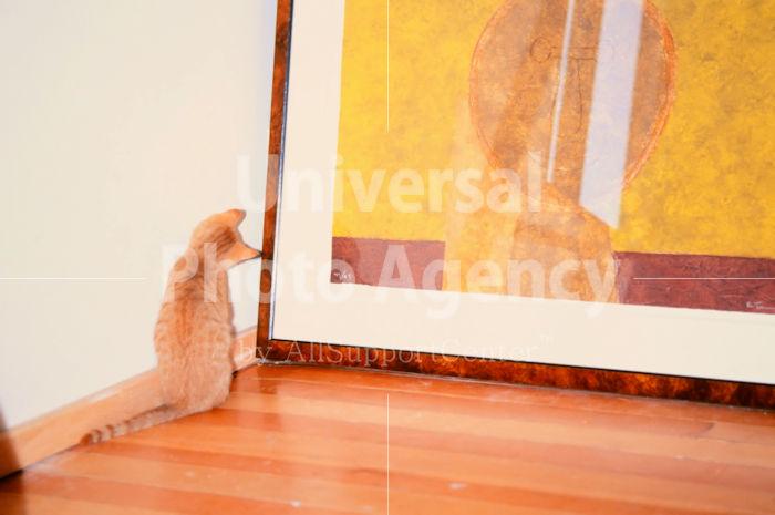 アメリカ サンフランシスコ 絵を不思議そうに眺めているネコ / sfcat01-90