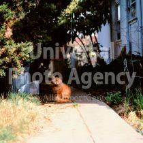 アメリカ サンフランシスコ 庭に同化するねこ / sfcat01-91